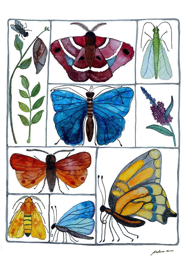 Schmetterlinge von Frau Ottilie